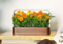 SmallGarden By ēdn Arrives With HomeKit Support [U]
